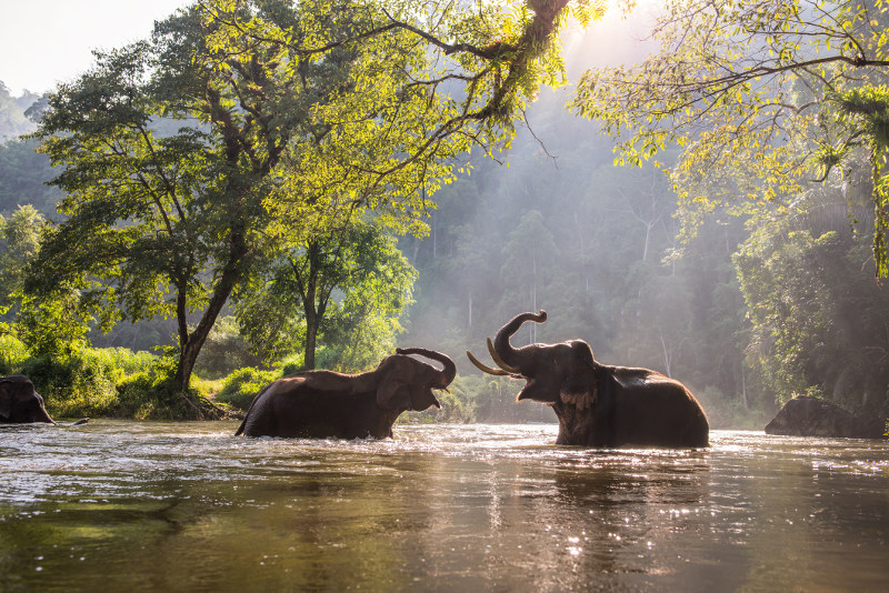 Elephants Northern Thailand