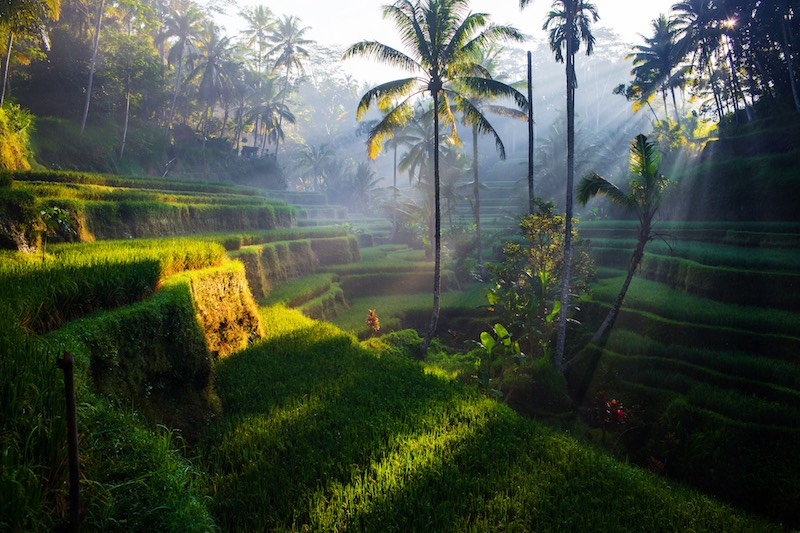 Rice terraces at sunrise