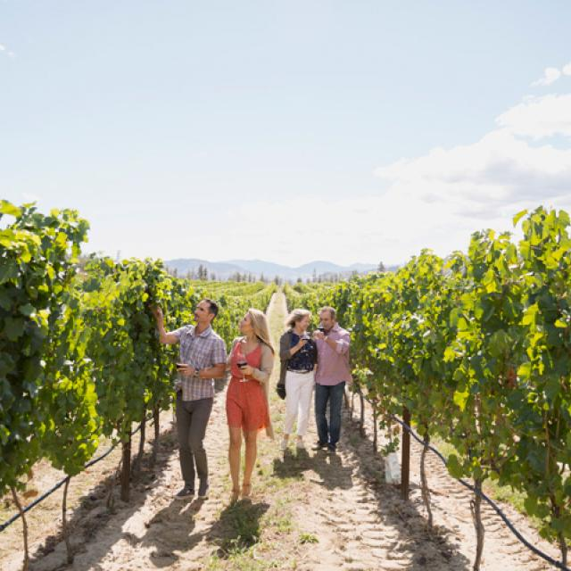 Couples looking at grapevines in sunny vineyard